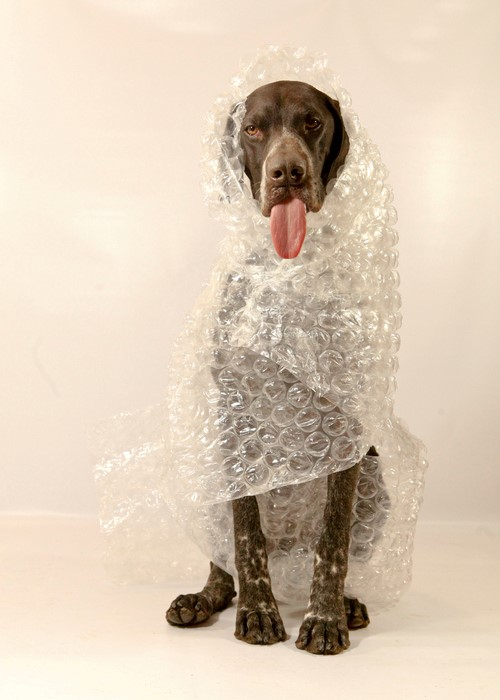 dog with bubble wrap
